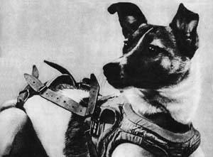 laika: first living animal to go into space